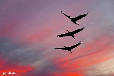 Photograph - Sandhill Cranes At Sunset by Jeff Goulden