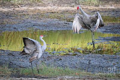 Photograph -  Sandhill Cranes Choreography by Carol Groenen