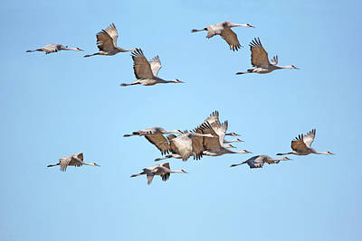 Curated Weekender Tote Bags - Sandhill Cranes in Flight by Jennie Marie Schell