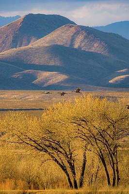 Photograph - Sandhill Cranes Near The Bosque by Jeff Phillippi