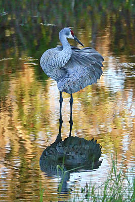 Photograph - Sandhill In Beautiful Water  by Carol Groenen