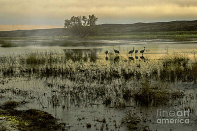 Photograph - Sandhill Serenity by Susan Warren