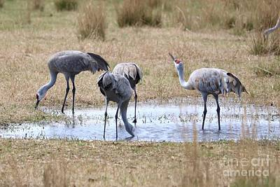 Photograph - Sandhills Sip And See  by Carol Groenen