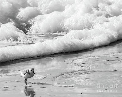 Photograph - Sandpiper In The Surf by Thomas Marchessault