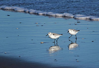Photograph - Sandpipers Along The Shore by Carolyn Derstine