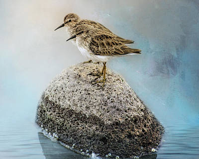 Photograph - Sandpipers On A Rock by Gloria Anderson