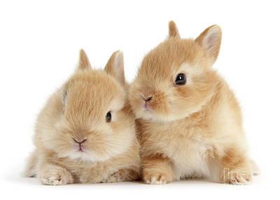 Photograph - Sandy Love Bunnies by Warren Photographic