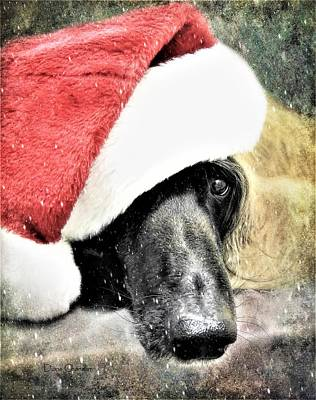 Photograph - Santa Baby by Diane Chandler