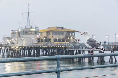 Photograph - Santa Monica Pier And Pigion  by John McGraw