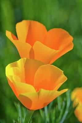 Photograph - Santa Rosa Plateau Poppies by Kyle Hanson