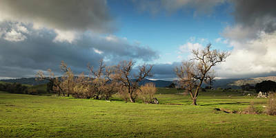Photograph - Santa Ysabel Trees In Light by William Dunigan