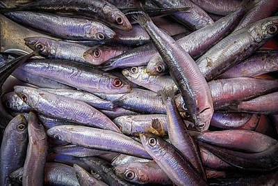 Western Art - Sardines by Nigel R Bell