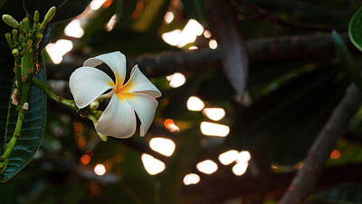 Photograph - Saved From The Lei by ProPeak Photography