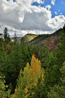Photograph - Sawpit Colorado Fall Colors by Ray Mathis