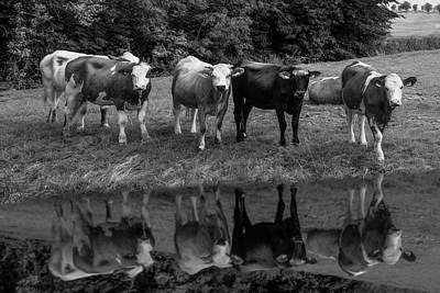 Photograph - Saying Hello In The Morning Sun Black And White by Debra and Dave Vanderlaan