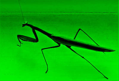 Photograph - Sayville Praying Mantis Green by Rob Hans