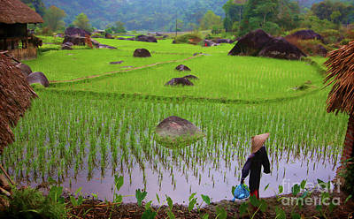 Photograph - Scarecrow Over Rice Fields Vietnam  by Chuck Kuhn