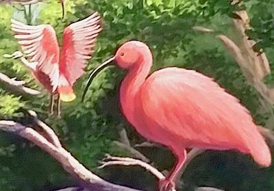 Painting - Scarlet Ibis by Dara Dodson