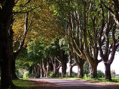 Caravaggio - Scenic Cotswolds - Autumn avenue by Seeables Visual Arts