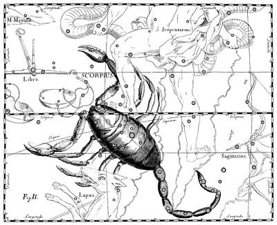 Drawing - Scorpius, Constellation Of Scorpio by Johann Helvelius