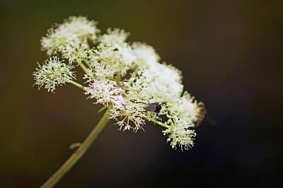 Photograph - Scotland. Loch Rannoch. White Flowerhead. by Lachlan Main