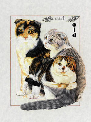 Drawing - Scottish Fold by Barbara Keith