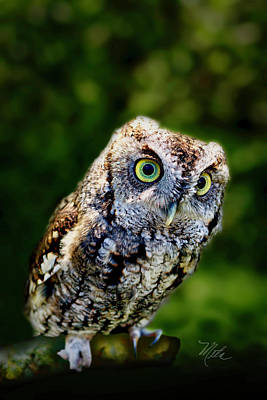 Photograph - Screech Owl by Meta Gatschenberger