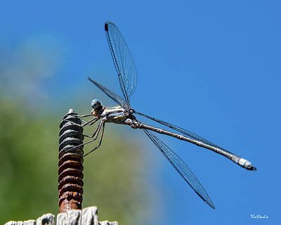 Photograph - Screwy Dragonfly by Tim Kathka
