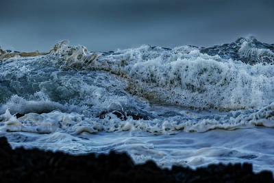 Photograph - Sea Creatures 1 by Werner Kaffl