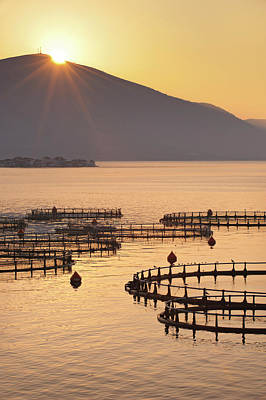 Trapped Photograph - Sea Fish Farm At Sunrise In Greece by Howardoates
