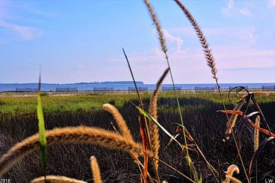 Photograph - Sea Grass At The Marsh by Lisa Wooten