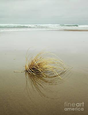 Photograph - Sea Grass On Beach by Charmian Vistaunet