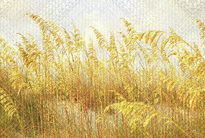 Mixed Media - Sea Grasses On Woven Flax by Clive Littin
