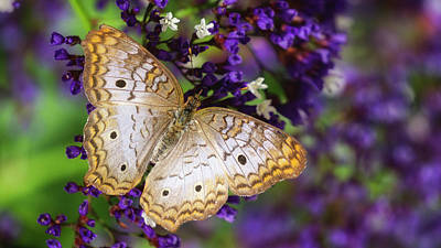 Photograph - Sea Lavender And White Peacock Butterfly  by Saija Lehtonen