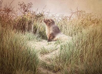 Photograph - Sea Lion New Zealand by Joan Carroll