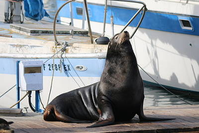 Photograph - Sea Lion On The Dock  by Christy Pooschke