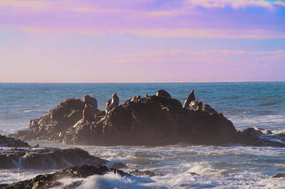 Photograph - Sea Lions At Shelter Cove California by Bill Cannon