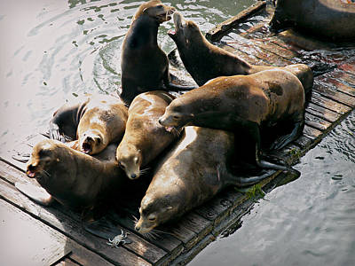 Photograph - Sea Lions In Newport by Micki Findlay