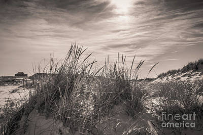 Photograph - Sea Oats And Sand Dunes  by Colleen Kammerer