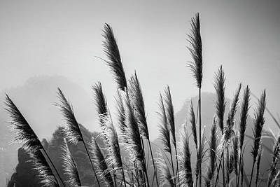 Photograph - Sea Oats I Bw by David Gordon