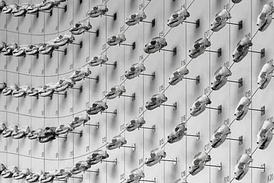 Photograph - Sea Of Skulls by KJ Swan