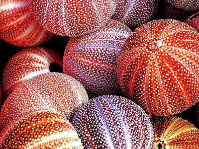 Photograph - Sea Of Urchins by Jo Parsons