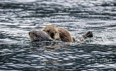 Photograph - Sea Otter Mom And Baby by Eva Lechner