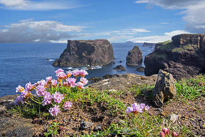 Photograph - Sea Pink Flowers On Scottish Cliff Top by Arterra Picture Library