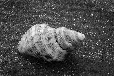 Photograph - Sea Rim Shell 10 by David Heilman