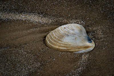 Photograph - Sea Rim Shell 2 by David Heilman
