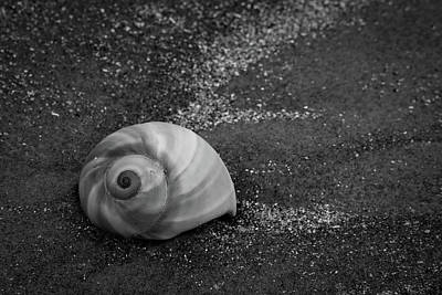 Photograph - Sea Rim Shell 4 by David Heilman