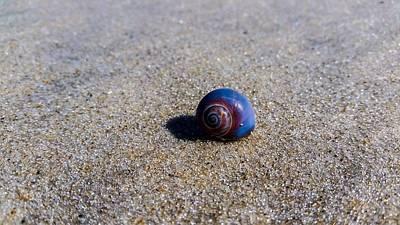 Anchor Down - Sea shell by Cristina Pena