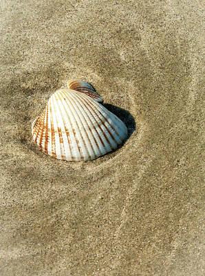 Photograph - Sea Shell by Louis Dallara