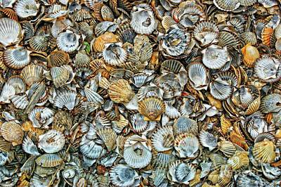 Photograph - Sea Shells by David Birchall